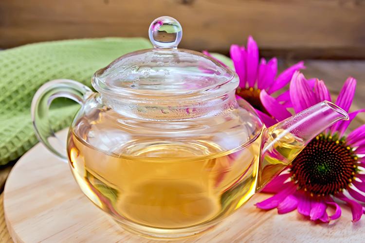 Weight loss tea-Echinacea tea