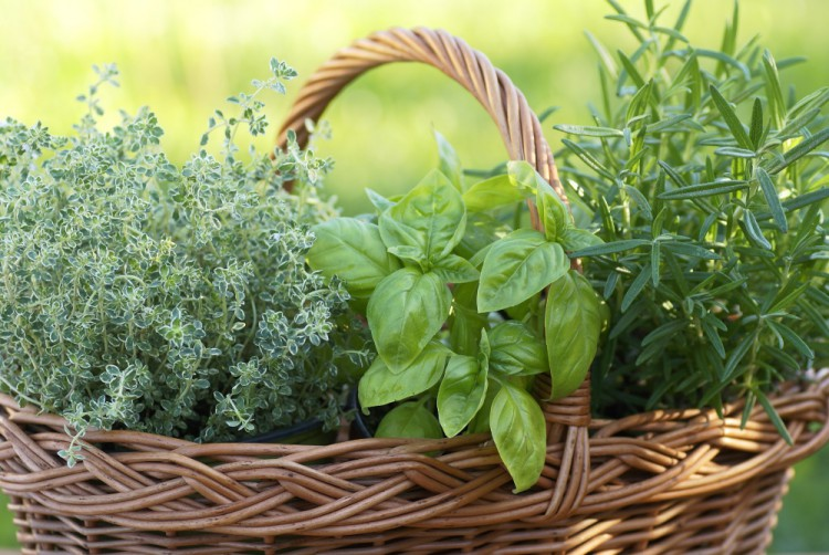 Delicious and Healthy Foods -Fresh-Herbs